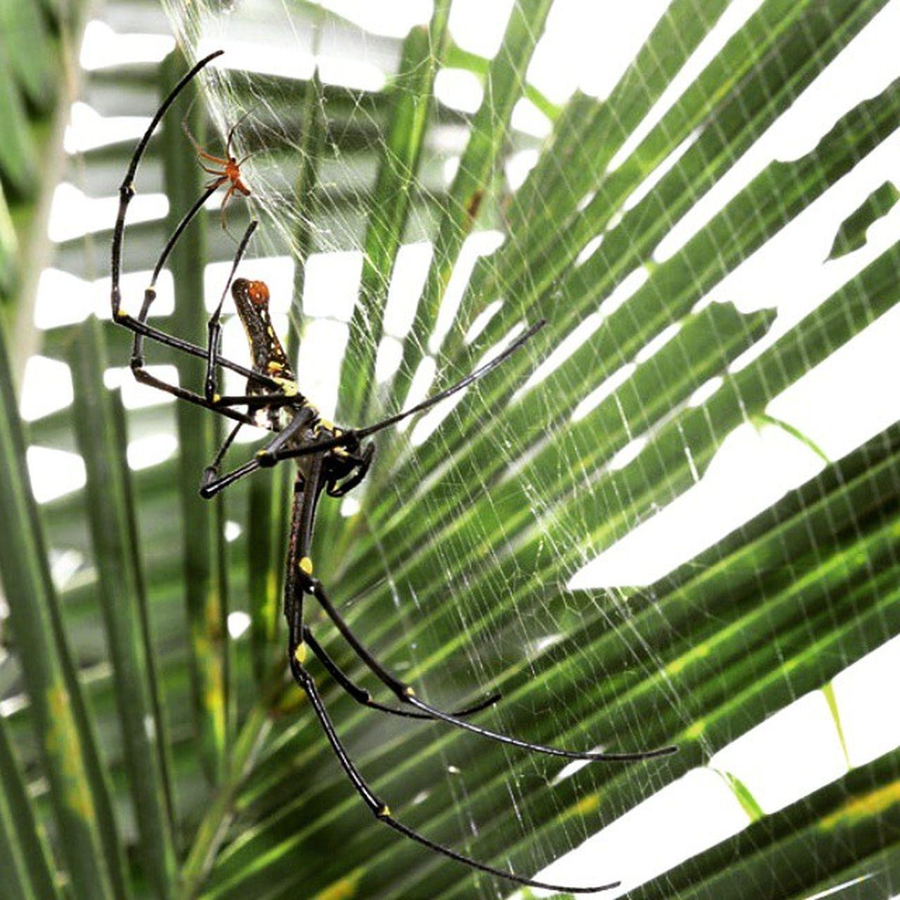 With the baby. Spider Ig_spider Greatmacro Spiderworld macro_x ig_closeups instashot instagaruda_macro