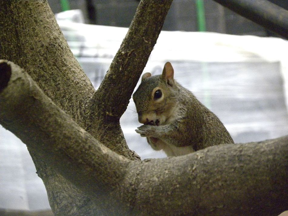 It seems that I really love squirrels... Squirrel Macro Details Nature_collection Animal_collection Holiday Memories The Best Of New York Check This Out Getting Inspired No Filter
