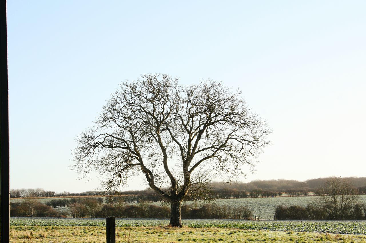 Tree Field Clear Sky Nature Rural Scene Sky Growth Grass Outdoors Agriculture No People Tranquility Landscape Day Beauty In Nature Banbury, England Travel Photography Inspirations Inspirational