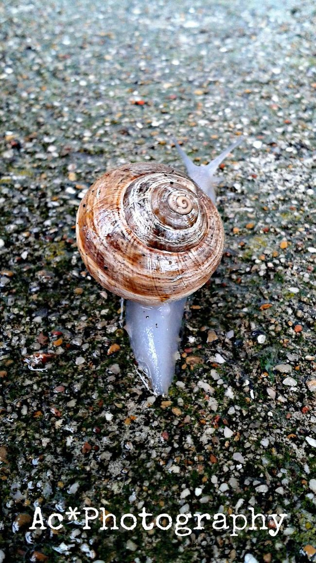 I have lived so long among people who do not understand me, been so long accustomed to refrain and disguise myself for fear of being laughed at, that I have grown as difficult to come at as a snail in a shell; and what is worse, I cannot come out of my shell when I wish it. -Jane Welsh Carlyle Life In A Shell It's A Bugs Life EyeEm Nature Lover Sluggin Along... Slug Bug