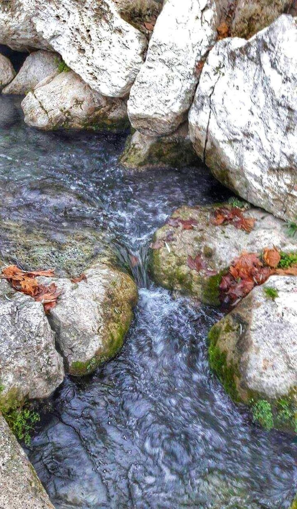 Nature Outdoors High Angle View Day Water No People Tree Beauty In Nature Close-up