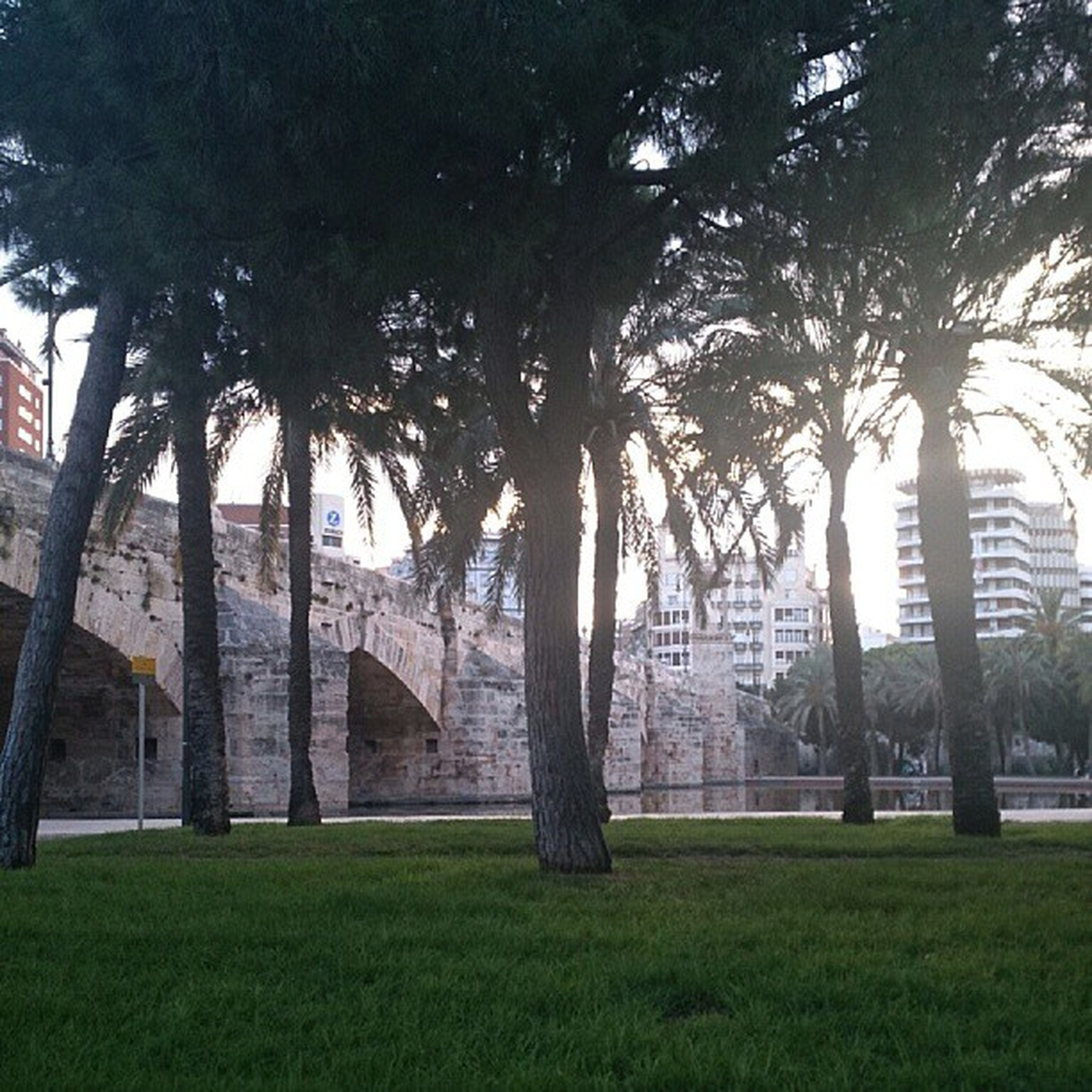 architecture, built structure, grass, tree, building exterior, lawn, green color, park - man made space, famous place, travel destinations, tree trunk, growth, arch, architectural column, sky, travel, tourism, palm tree, sunlight, outdoors