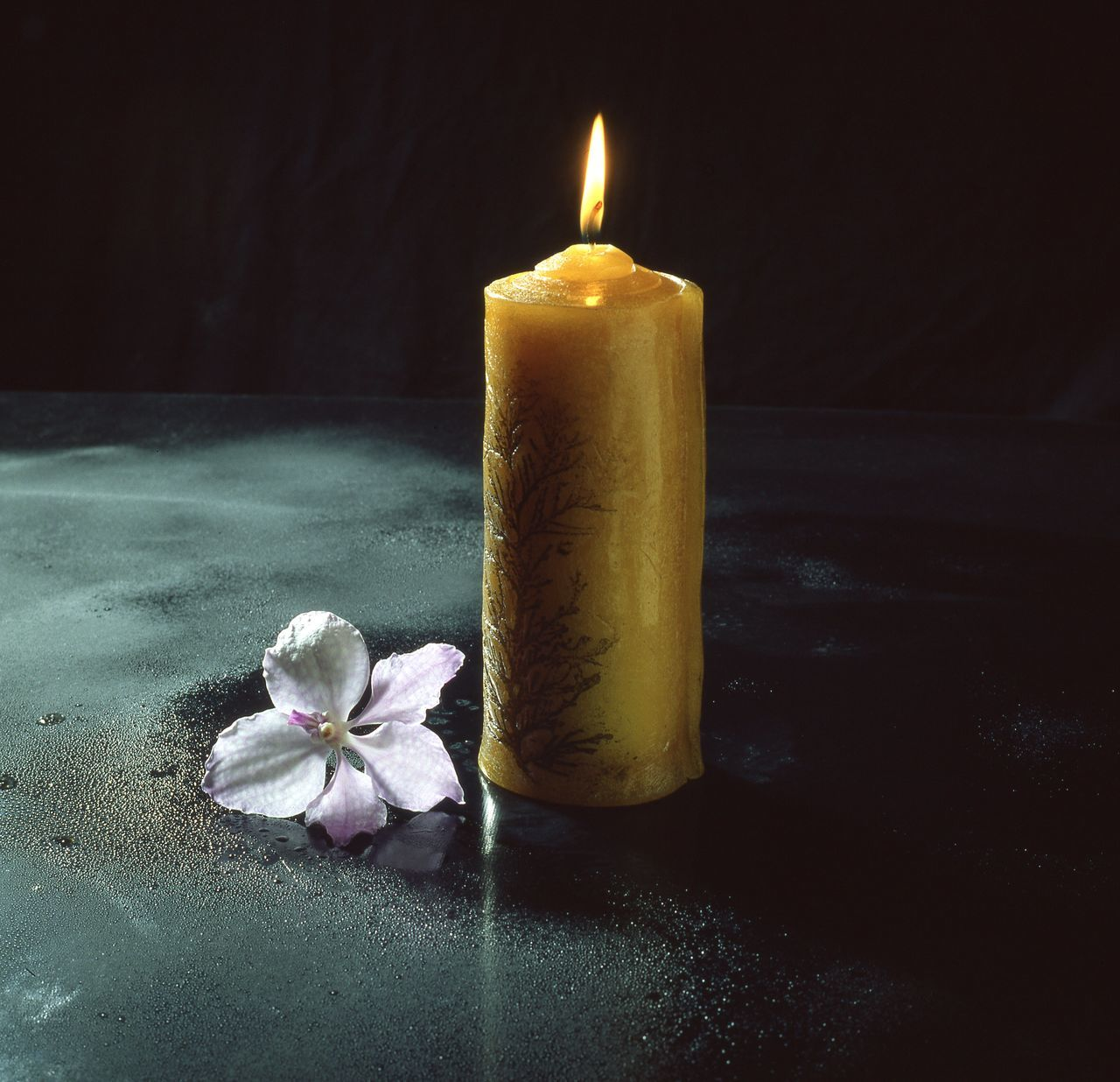candle, flame, flower, burning, close-up, table, no people, indoors, petal, freshness, heat - temperature, flower head, fragility, black background, nature, day
