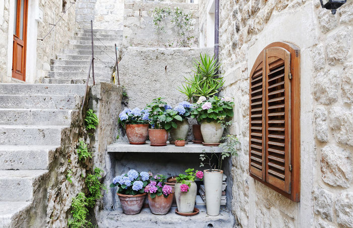 Architecture Building Exterior Built Structure Colorful Croatia Day Dubrovnik Europe Flower No People Outdoors Pots Of Flowers Potted Plant Shutters Stone Stairs Stone Wall Tourism Travel Window Window Box Windows