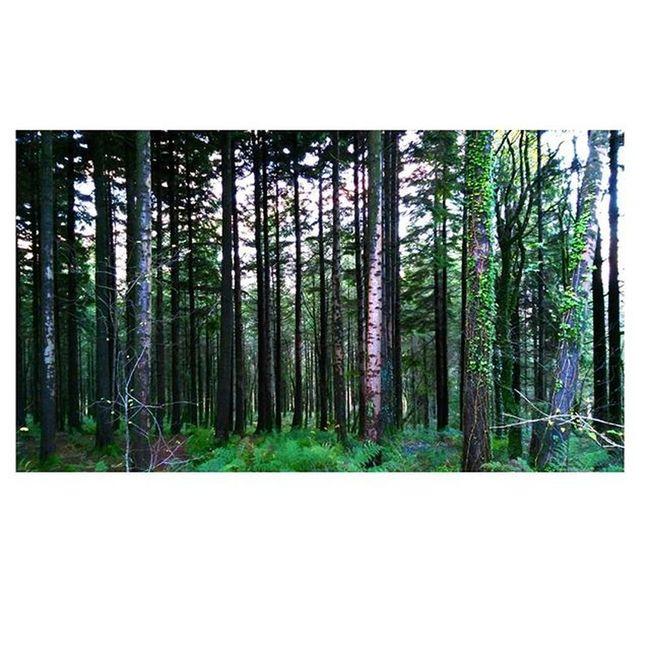 sunday Forest Wood Tree Green Nature Sunday Macroom Cork Ireland Nofilters
