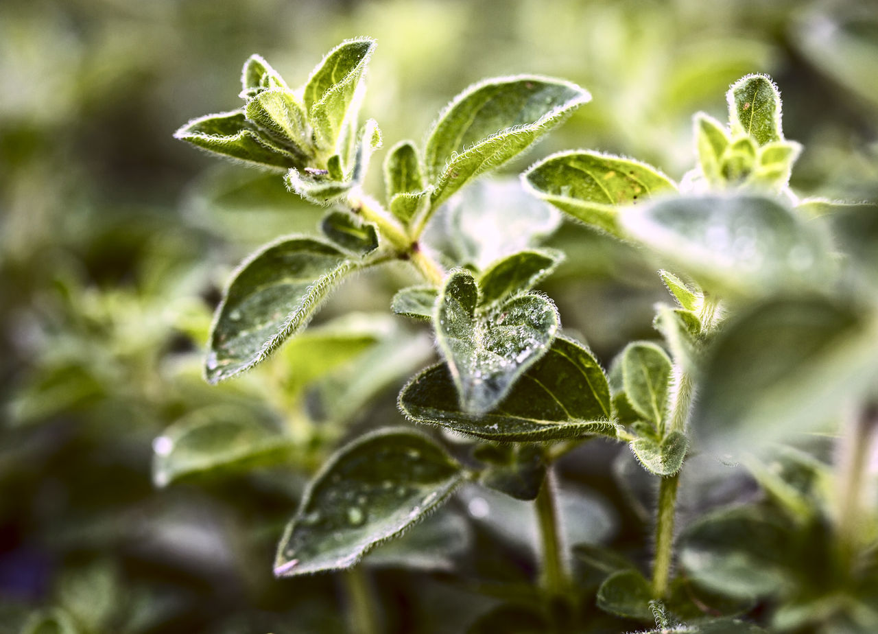 Beauty In Nature Close-up Day Depth Of Field Detail Drop Fragility Freshness Green Color Growth Leaf Nature No People Outdoors Plant Water