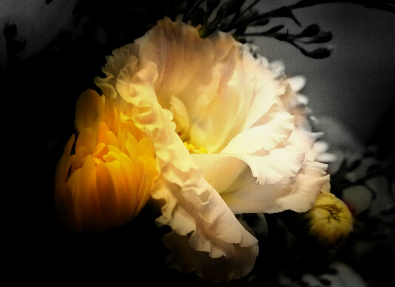 For you! 😉💛💛💛 TakeoverContrast Creative Light And Shadow Every Picture Tells A Story Selective Focus Beauty In Nature Yellow Close-up Light In The Darkness AMPt - Still Life (Nature Morte) Beauty In The Darkness Hidden Places