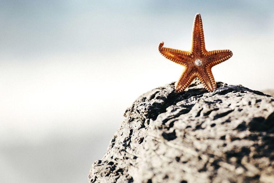 Beautiful stock photos of starfish, Animal, Animal Themes, Beauty In Nature, Close-Up