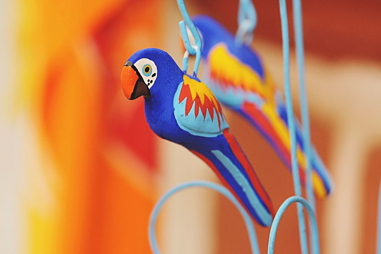 Handcraft Animal Themes Close-up Bird Multi Colored Day No People Handmade Brasil