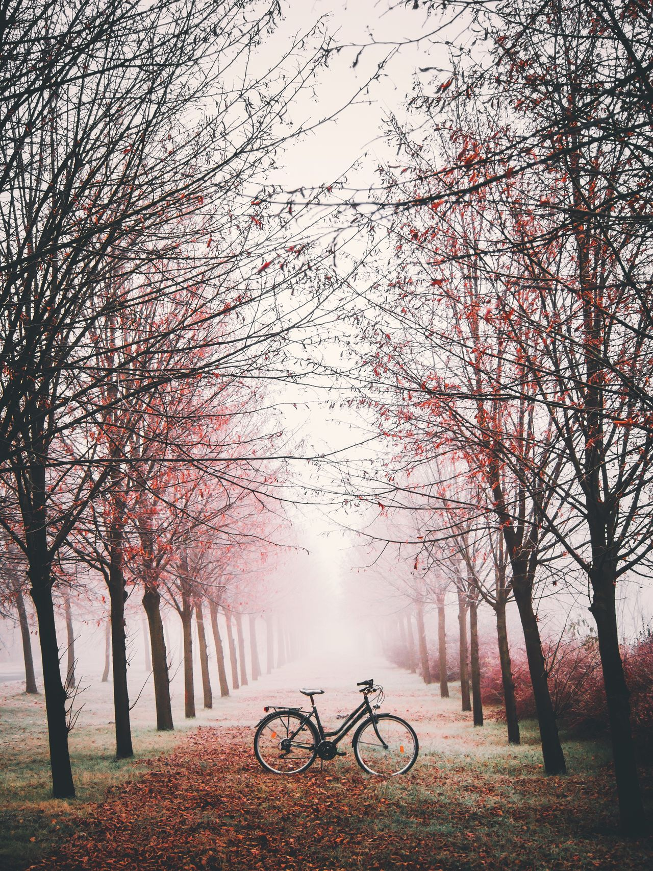 Bicycle Tree Transportation Cycling Springtime Branch Mode Of Transport Nature Outdoors Beauty In Nature Flower Sky No People Day