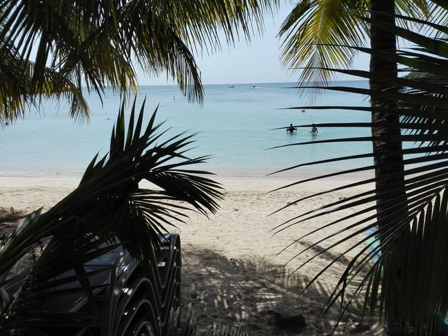 Honduras Bay Islands Beach Beauty In Nature Day Horizon Over Water Idyllic Nature No People Outdoors Palm Frond Palm Leaf Palm Tree Sand Scenics Sea Sky Tranquil Scene Tranquility Tree Tree Trunk Water