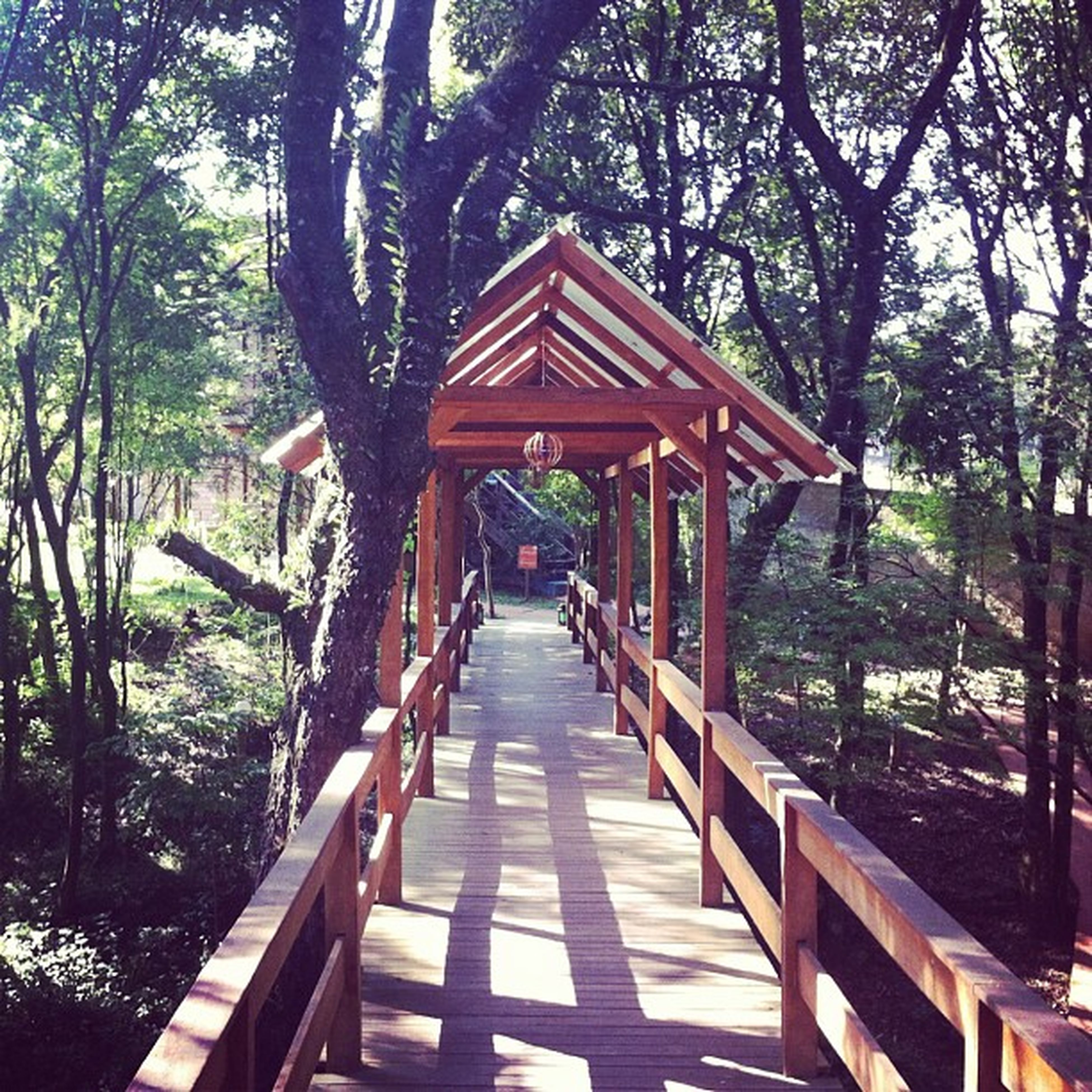 tree, built structure, architecture, railing, footbridge, wood - material, the way forward, connection, forest, bridge - man made structure, growth, day, tranquility, nature, outdoors, building exterior, branch, no people, wooden, sunlight