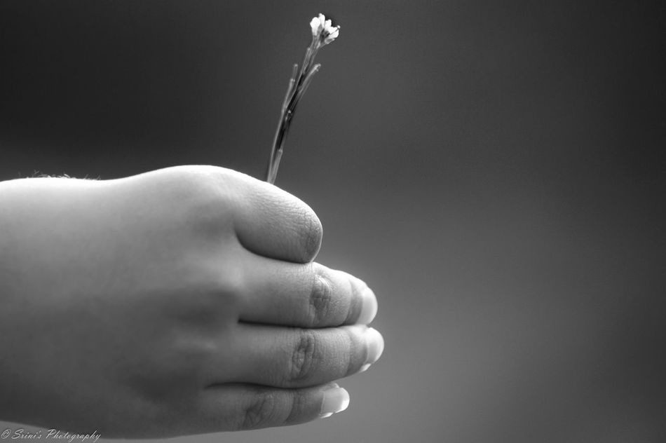 Signs of Hope Adult Black & White Blackandwhite Budding Flower Close-up Day Holding Hop Hope Hopes And Dreams Human Body Part Human Finger Human Hand Human In Nature Nature Photography Nature_collection One Man Only One Person Outdoors People Plants And Flowers Real People Studio Shot Warm Warmth
