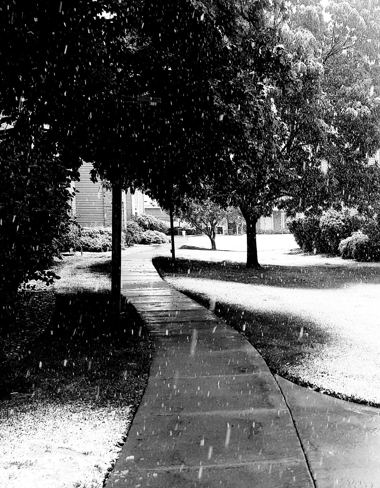 Snowy Sidewalk in . . . May? Outdoors Tranquil Scene Snowscape Snowy Trees Snow Day Snowy Morning Snowy Walk Sidewalk Sidewalk Photography Sidewalk In A Snowy Spring Snowy Spring