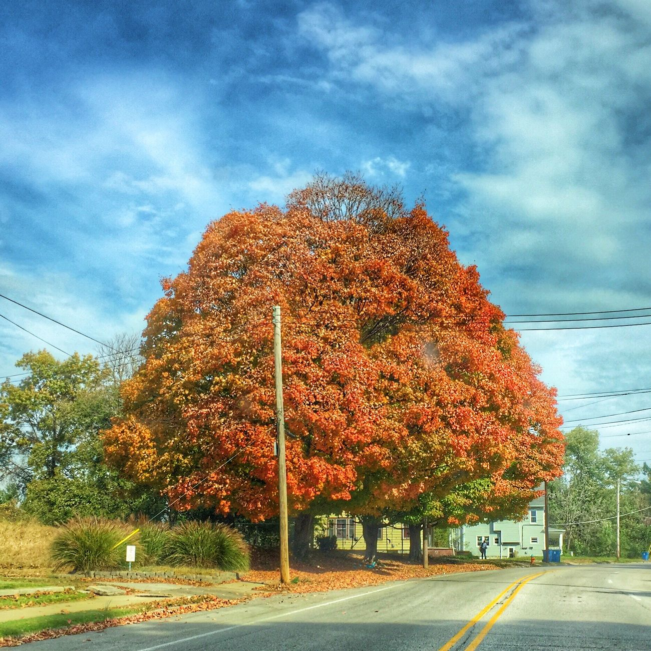 Love the colors Tree Change Autumn Beauty In Nature Illinois