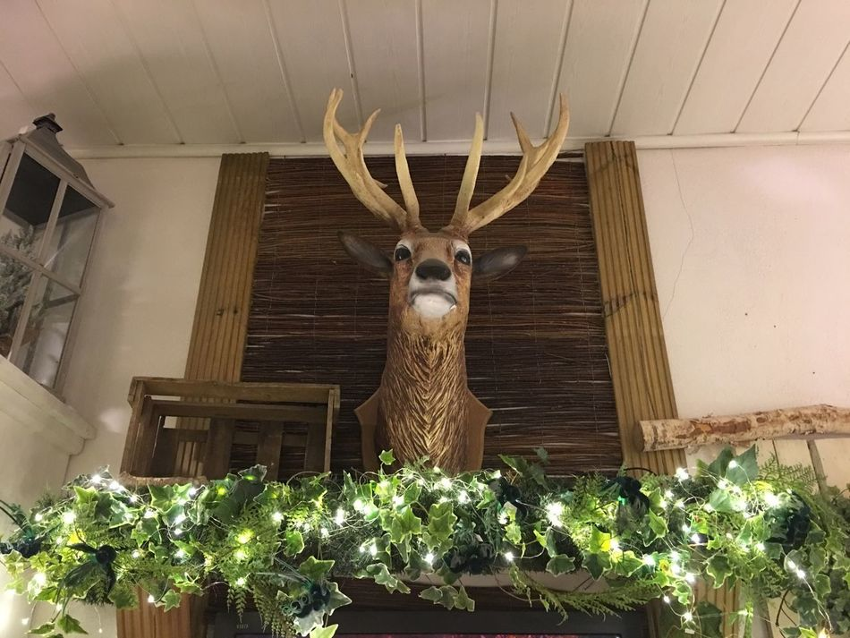 Deko Low Angle View Indoors  Christmas Taxidermy No People Built Structure Statue Architecture Illuminated Animal Themes Day Mammal Nature_collection Low Angle View Dekoration Weihnachtsdeko Beauty In Nature