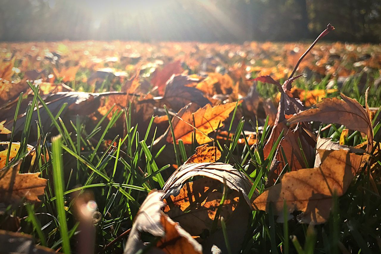 Fall leaves in New England Leaf Autumn Nature Beauty In Nature Grass Change Outdoors Close-up Leaves Field Growth