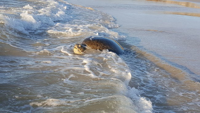 Animal Head  Animal Themes Beauty In Nature Coastline Motion Nature Ocean One Animal Sea Sea Turtle Seascape Surf Swimming Water Waterfront Wave
