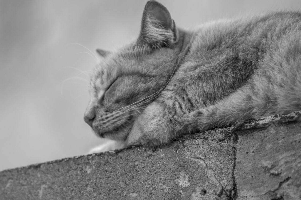 Beautiful stock photos of peaceful,  Animal Themes,  Cat,  Close-Up,  Day