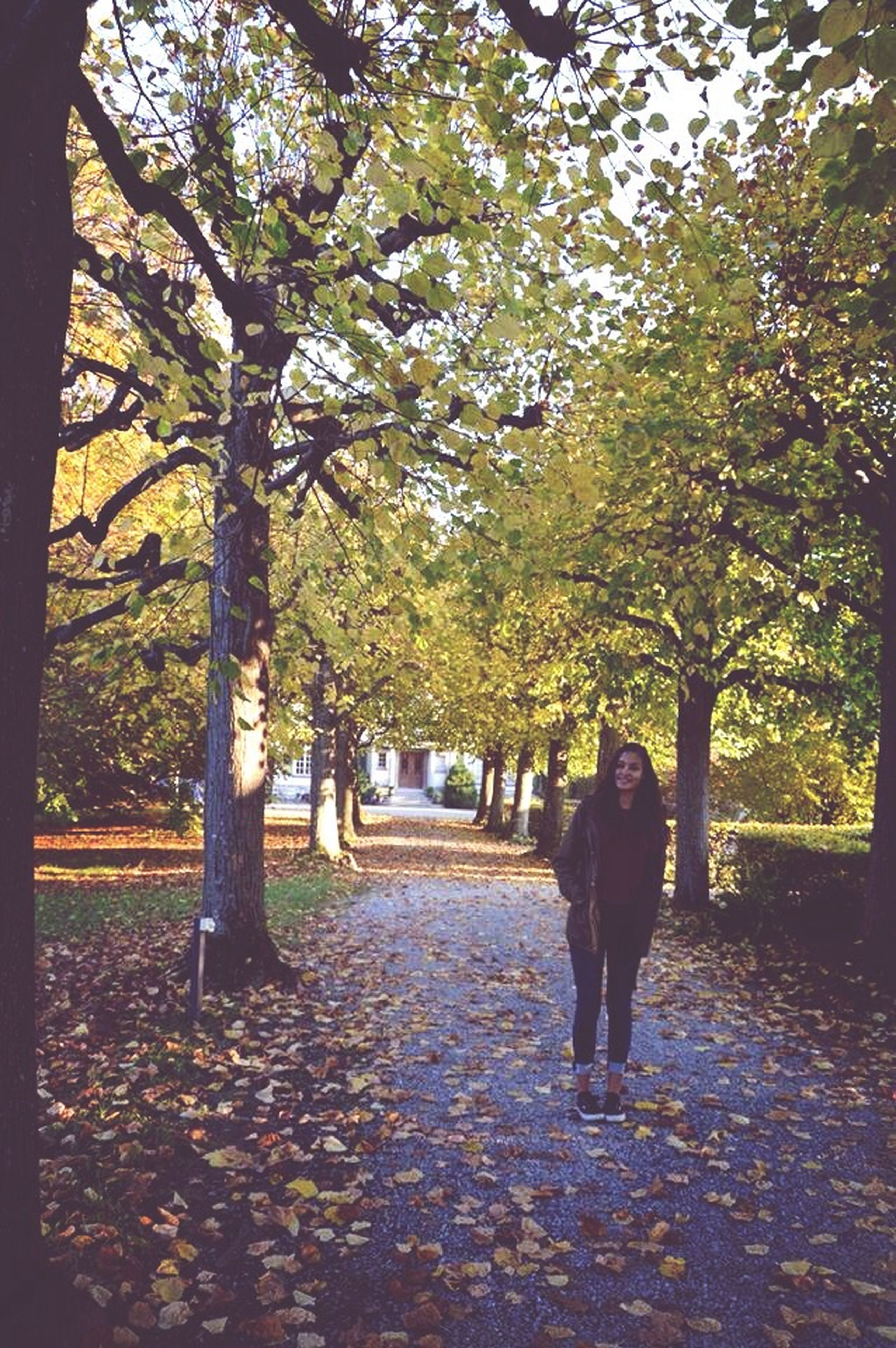 tree, autumn, walking, rear view, change, season, lifestyles, the way forward, men, leisure activity, leaf, person, full length, treelined, footpath, park - man made space, nature, growth
