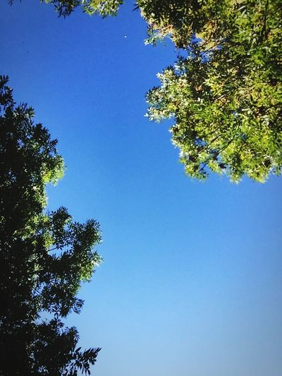 Sky & Trees in South West France