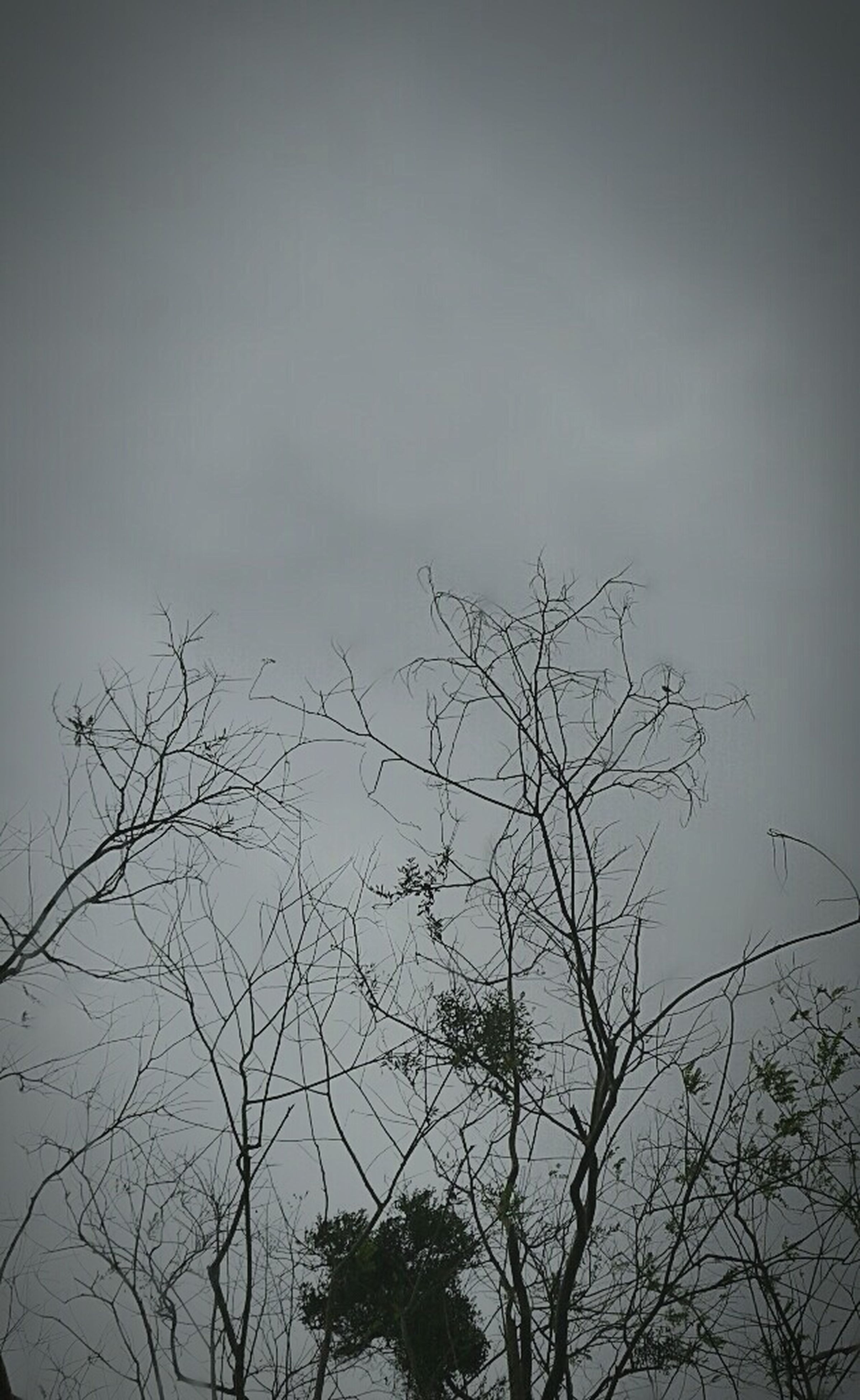 nature, silhouette, no people, dusk, tree, sky, cloud - sky, beauty in nature, low angle view, bare tree, outdoors, branch, storm cloud, day