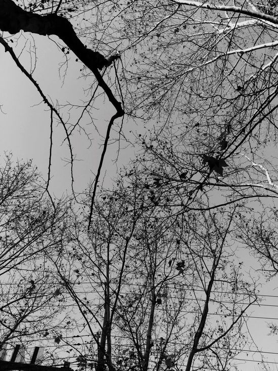 Tree Branch Bare Tree Nature Low Angle View Beauty In Nature Tranquility No People Sky Outdoors Day Black And White Moning Walk Shanghai Streets Shanghai, China Winter Plant
