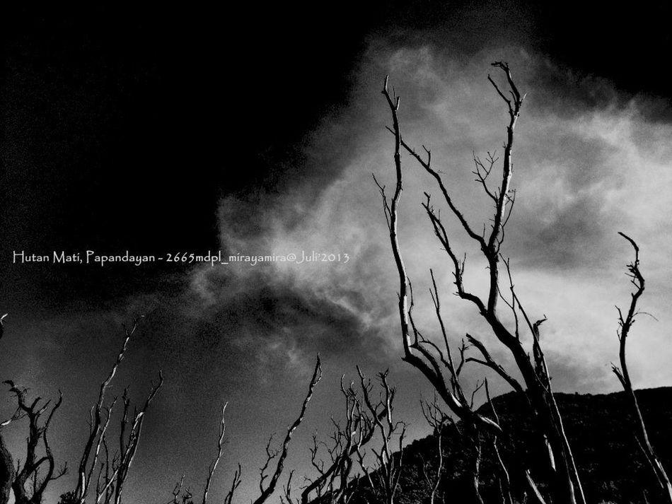 Hutan Mati Papandayan Forest Mountain