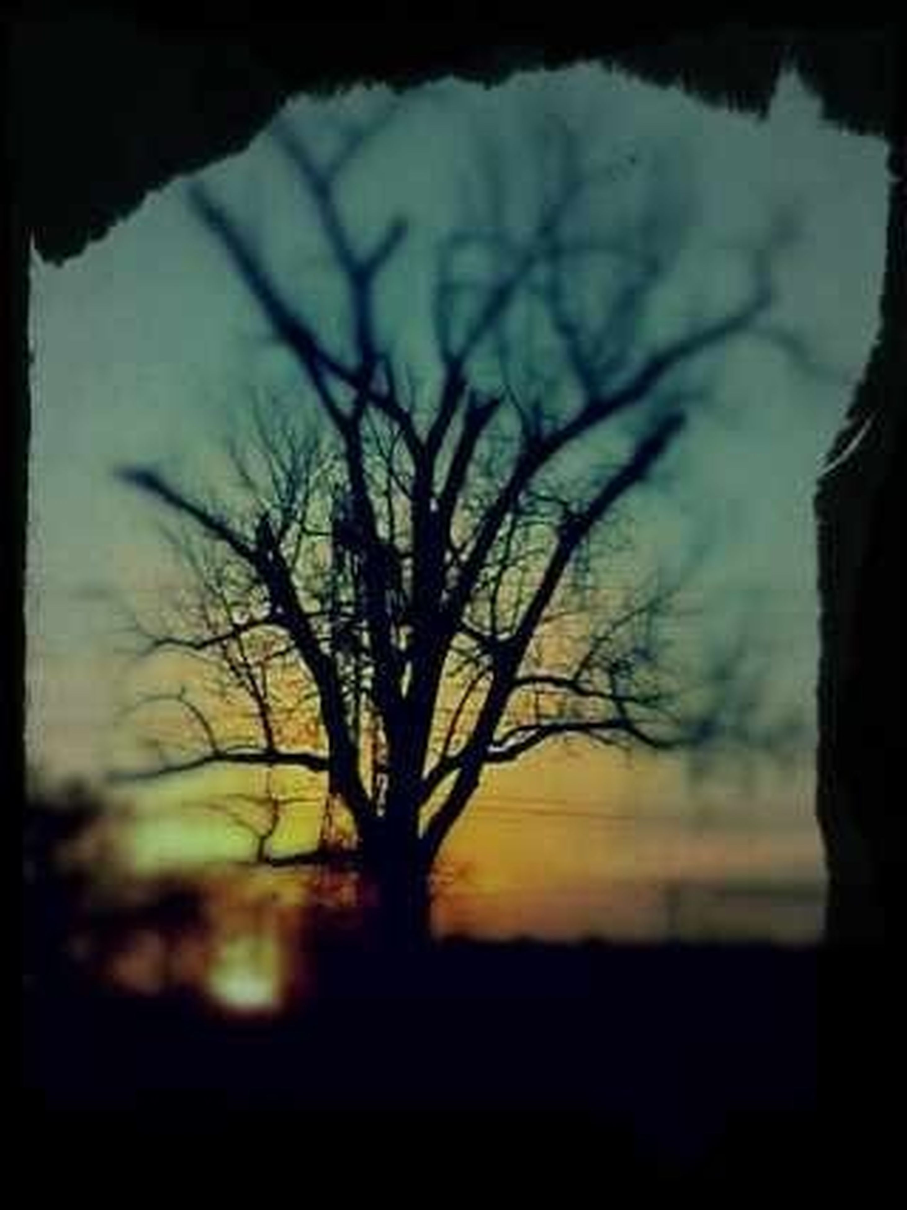 bare tree, silhouette, branch, tree, sunset, tranquility, tranquil scene, sky, nature, beauty in nature, transfer print, scenics, auto post production filter, tree trunk, landscape, growth, dusk, outdoors, no people, non urban scene