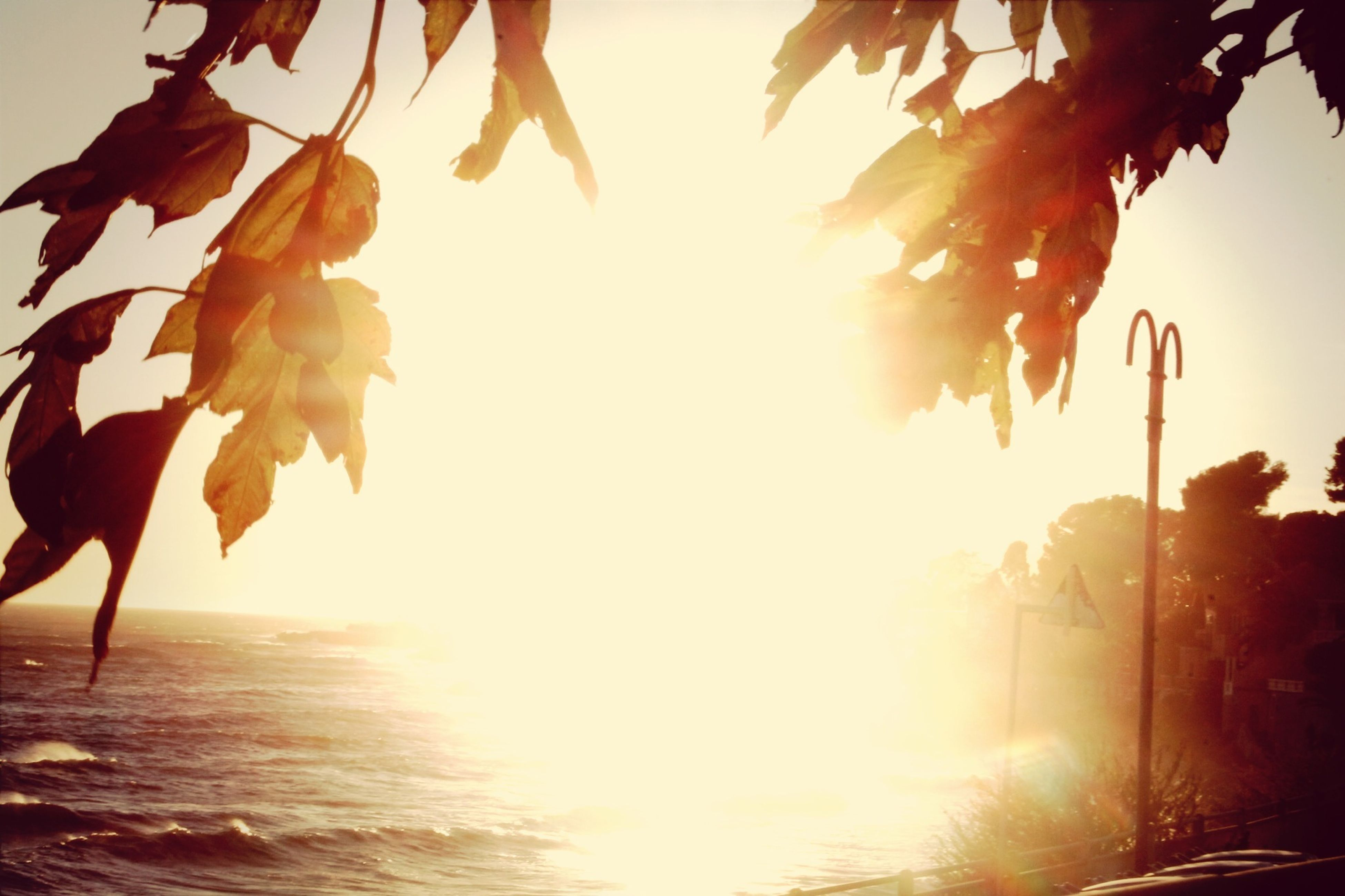sun, sunlight, sunset, sunbeam, tree, beauty in nature, clear sky, leaf, nature, tranquility, lens flare, growth, sea, scenics, tranquil scene, orange color, water, branch, bright, horizon over water