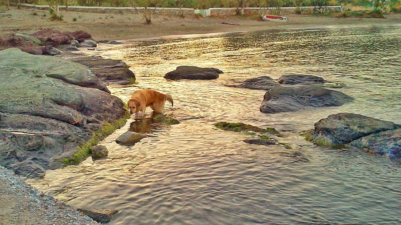Sunlight Nature Beach Sand Outdoors Golden Retriever Dog Dogs Of EyeEm Dog Water