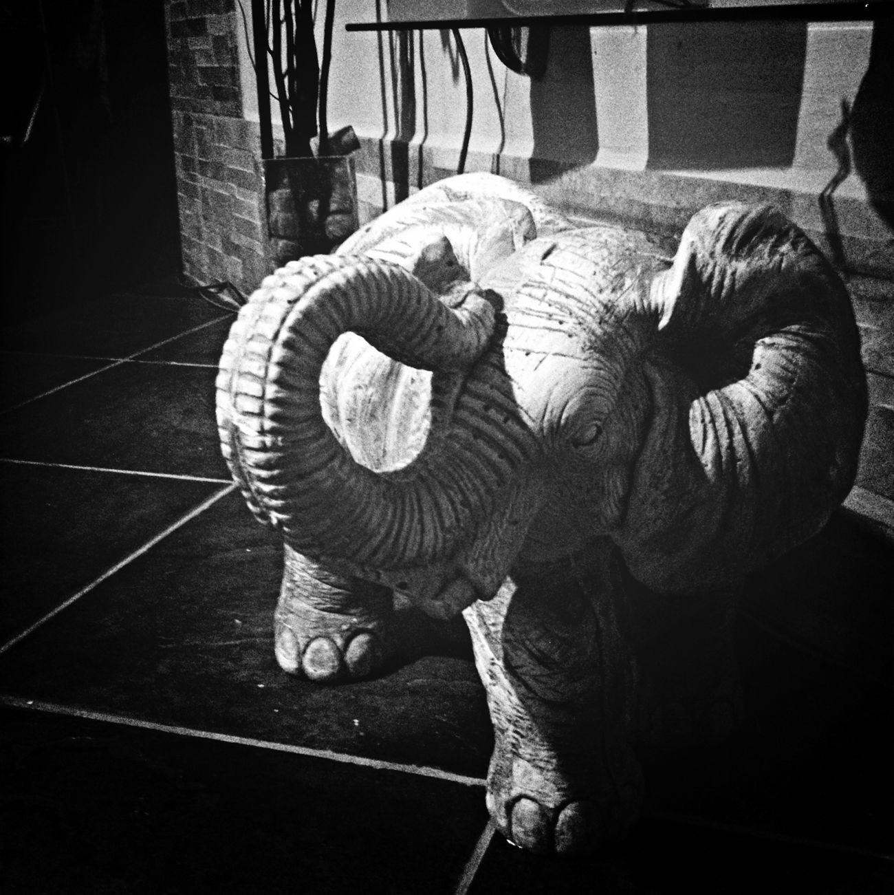Elephant Power Greek Catania First Eyeem Photo