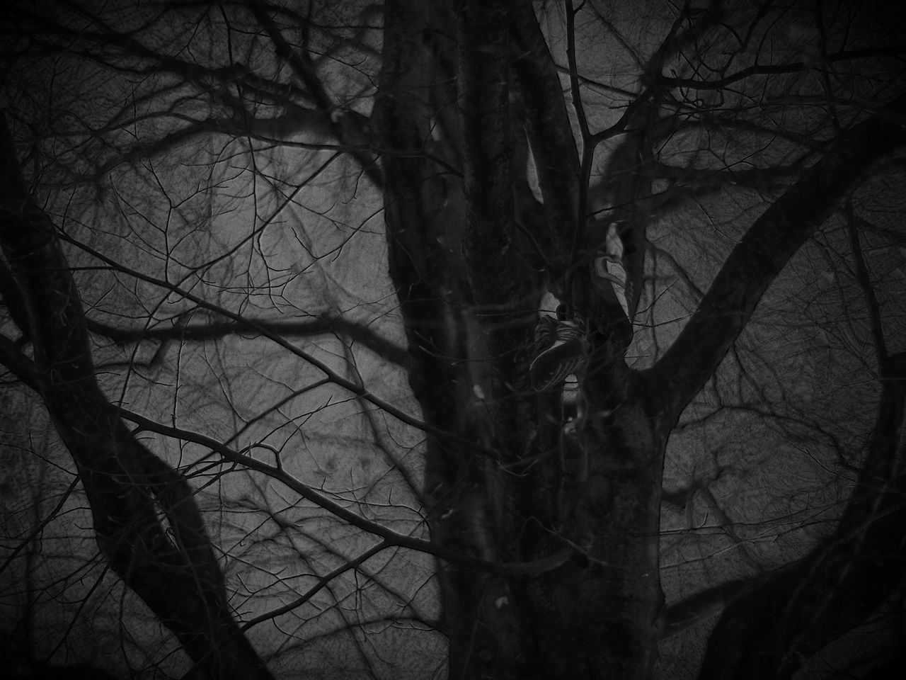 Hanging out... Tree Bare Tree Branch Tree Trunk Forest Nature Tranquility No People Outdoors Sky Sneakers Shallow Depth Of Field Blackandwhite Monochrome Black And White Black & White Nightphotography Night Photography