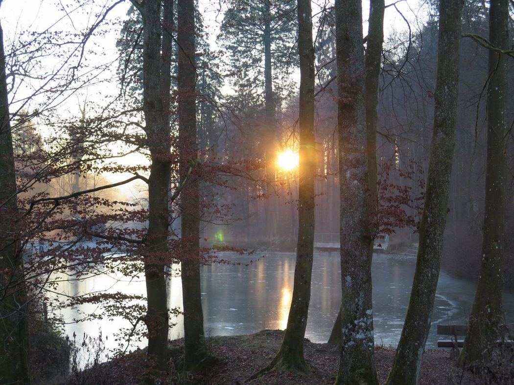 Trees And Nature Sunlight Cold Days Forest Photography Frozen Ponds Naturelover Nature Winterthur Switzerland