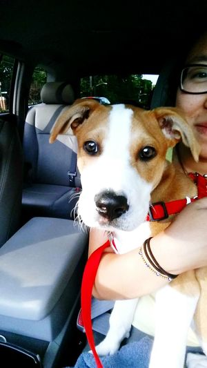 Pets Corner someone wanted to take a selfie Henry Puppy Terrier Mutt