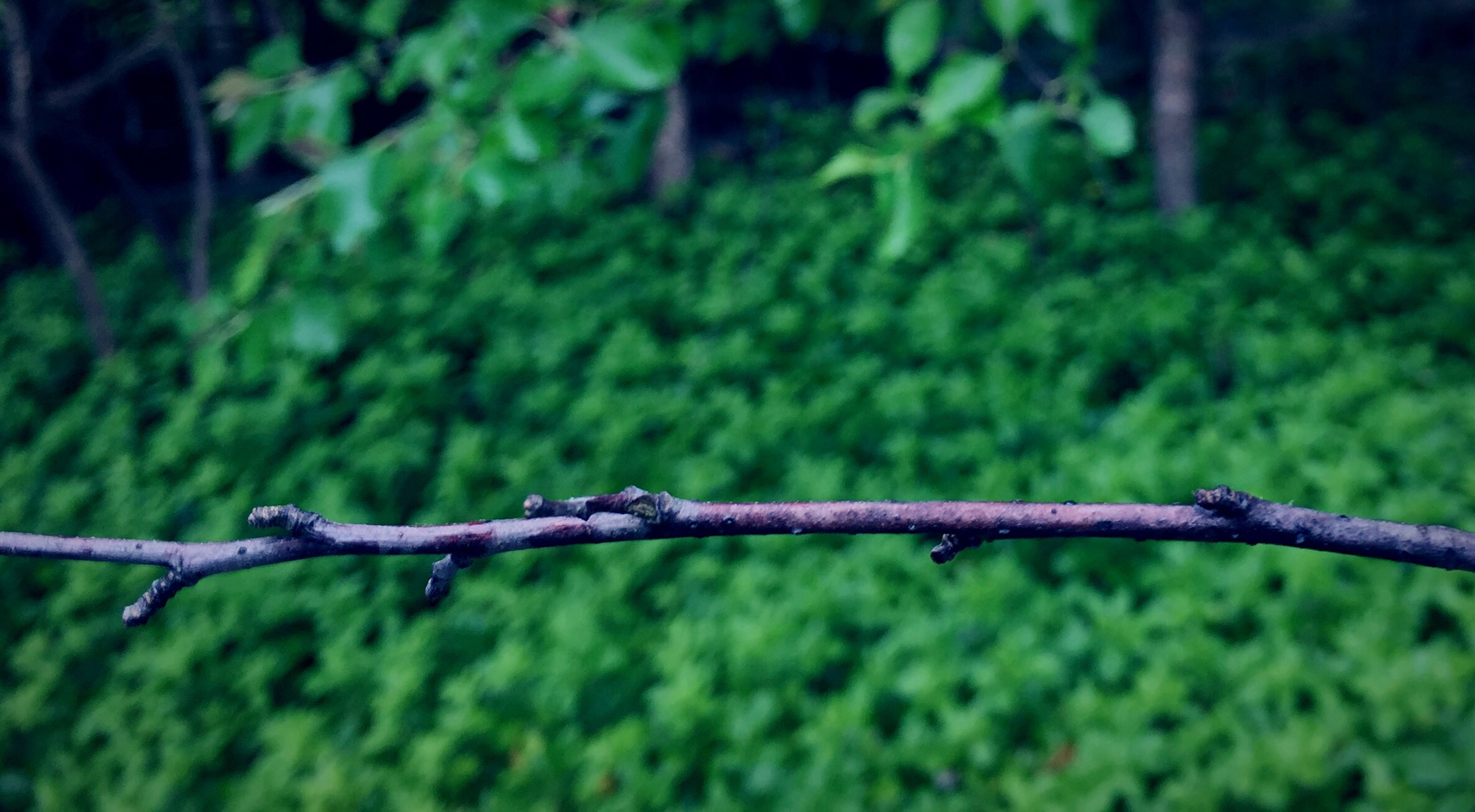 focus on foreground, close-up, green color, fence, nature, selective focus, barbed wire, branch, protection, tranquility, growth, tree, safety, outdoors, day, forest, beauty in nature, metal, no people, security