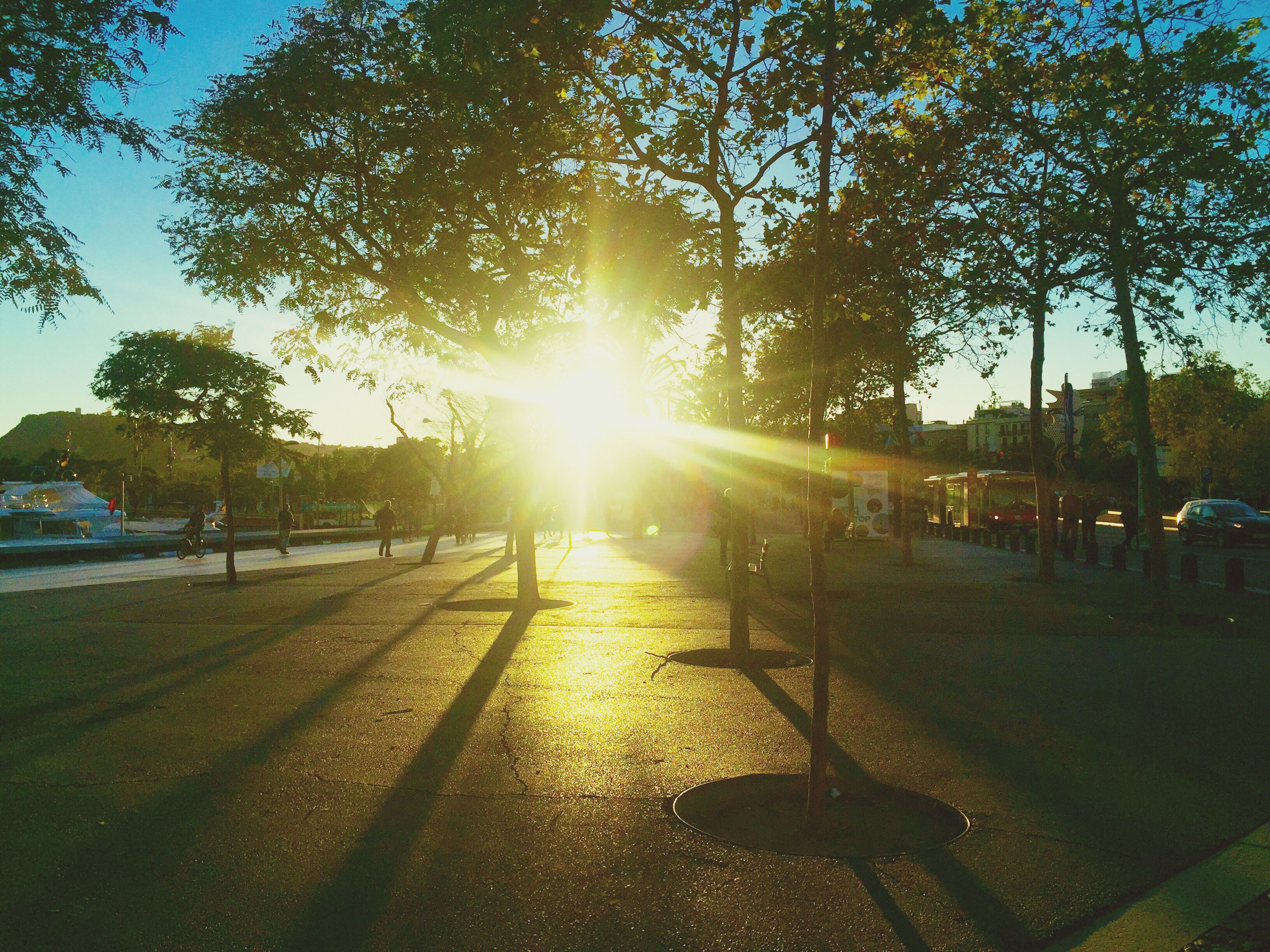 tree, sunlight, lens flare, sunbeam, sun, outdoors, nature, sunset, growth, sky, beauty in nature, day, no people