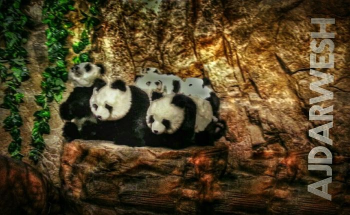 Banda HDR Art Popular Photos Colorful Nature Photography Zoo Animals  Photography Photo Hi!