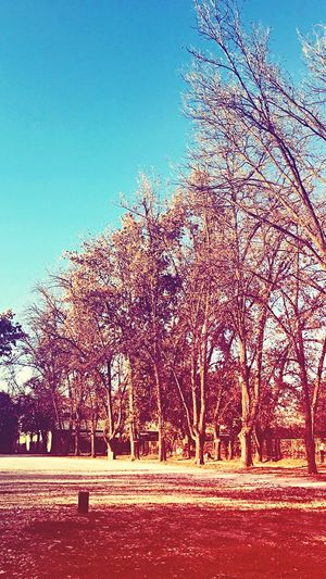 Just a nice day photo Nature Lebanon Bekaa Taanayel Outdoors No People