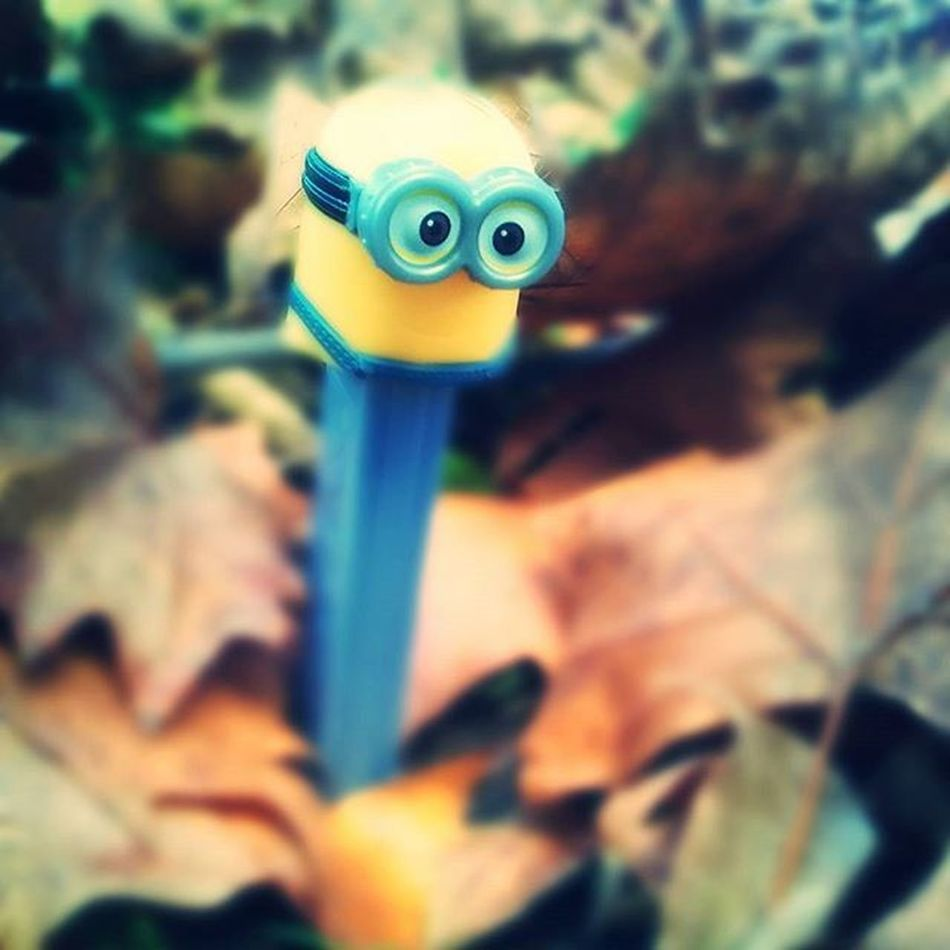 Toy Fun PEZ Candy Minion  Love Gift Minionlive Leaves Play Childish NeverGrowUp Blur Autumn Colorfull New Now