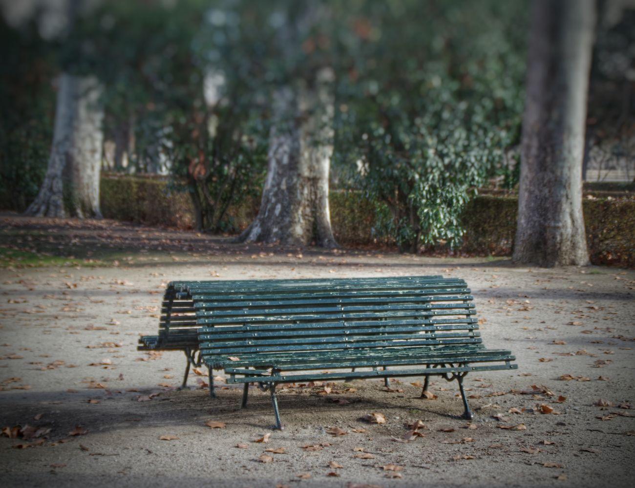 Bench in the Aranjuez gardens. Banco en los jardines de Aranjuez Aranjuez Bench Banco