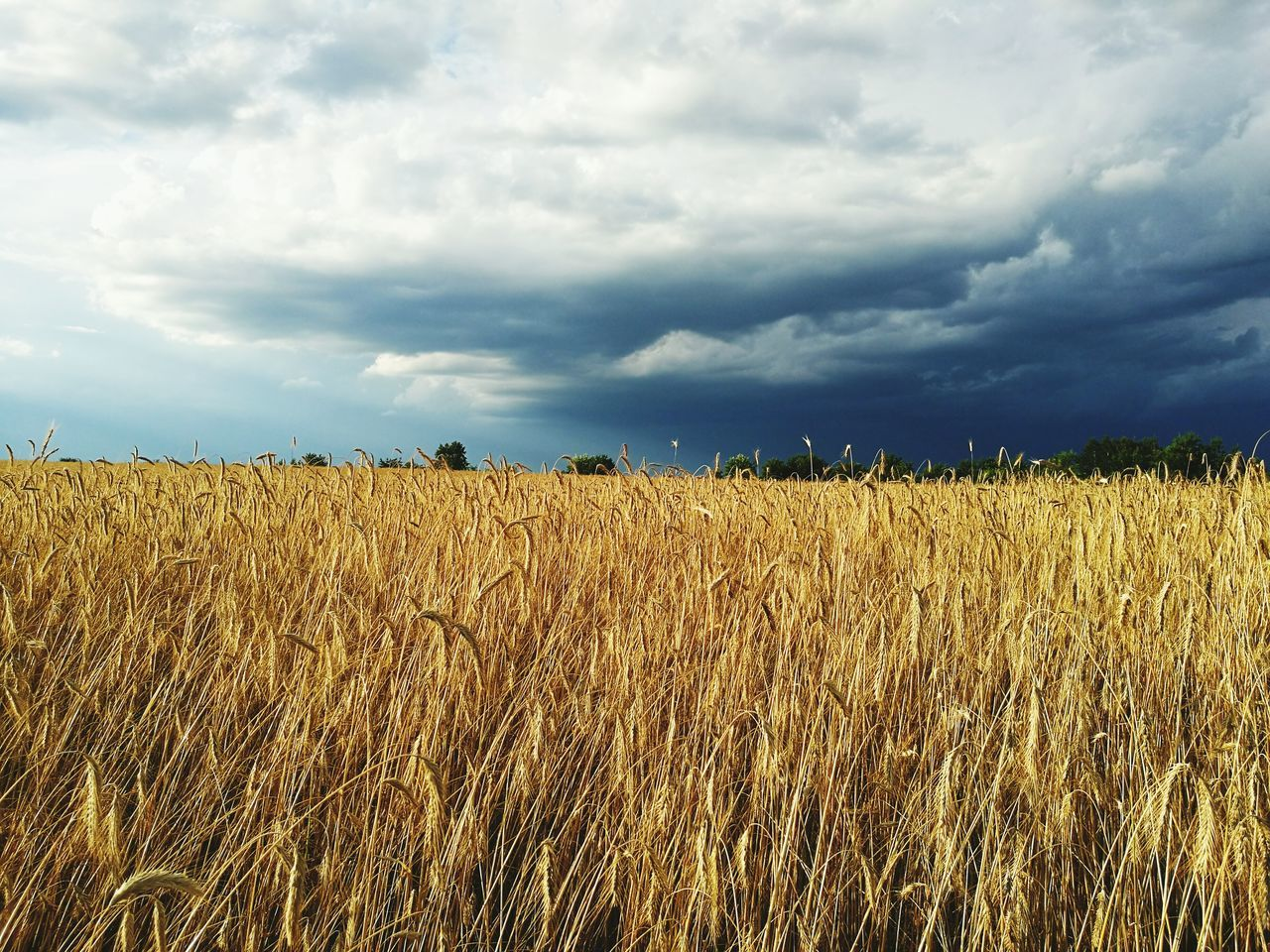 First Eyeem Photo Grain Field Weather Clouds Nature Nature Photography Sky And Clouds Sky_collection Cloud - Sky Cloudy Stormy Weather