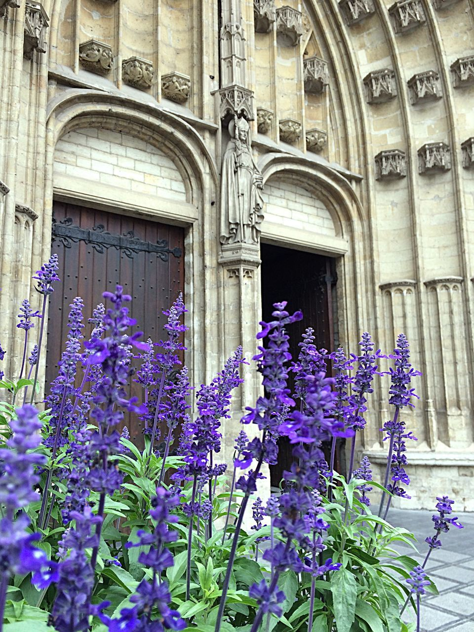 architecture, building exterior, built structure, flower, purple, history, no people, outdoors, day