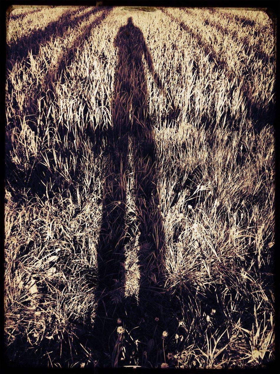 Der lange Schatten Grass Outdoors Field Day Nature One Person Real People People Schatten Schattenspiel  Lange Schatten Grassland Gras  Shadow Abend Abendstimmung Giant Gigant Riese