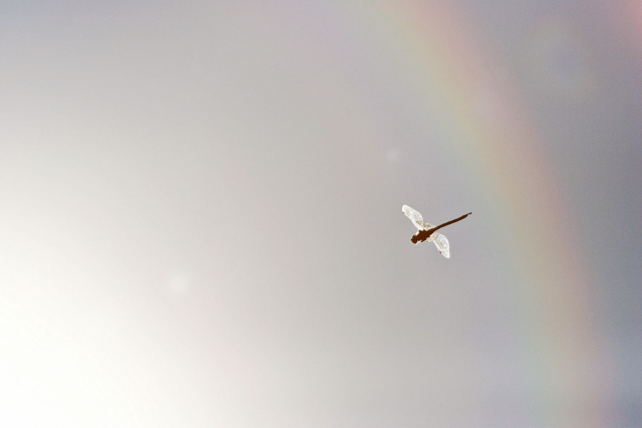 Beautiful stock photos of rainbow, Animal Themes, Animals In The Wild, Day, Dragonfly