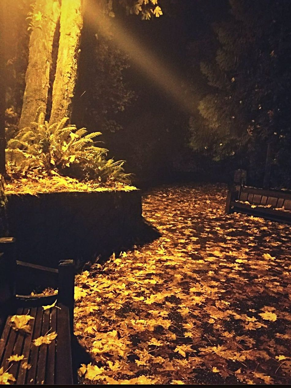 Nature Water Outdoors No People Beauty In Nature Night Sky walk paths deeper into the forest leaves fall perfect light lighting nighttime in Portland wonder secret garden Classic Elegance Landscape First Eyeem Photo Tranquil Scene Beauty In Nature Tranquility Branch Nature Tree