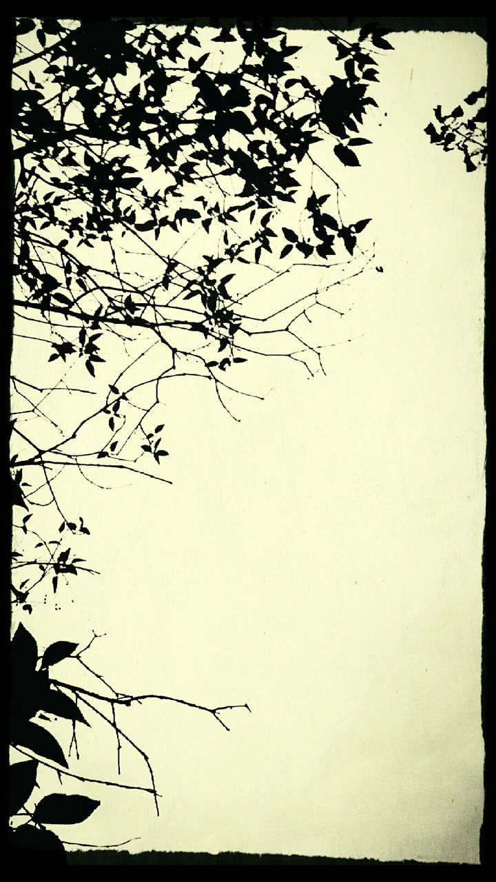 nature, silhouette, growth, summer, no people, outdoors, branch, clear sky, beauty in nature, day, sky