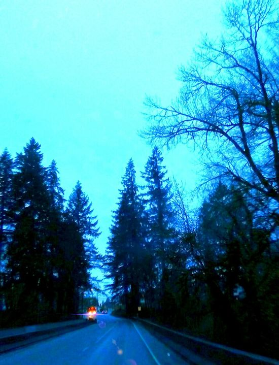 Tree Road Blue Transportation Cold Temperature Nature Outdoors The Way Forward Landscape Winter Forest Idyllic Bright_and_bold I Love Photograpy Artistic Perception Getty Images 2016 EyeEm Awards My Year My View For The Love Of Art Original Photography Cellphone Photography Fragility Vibrant Color Scenics Beauty In Nature