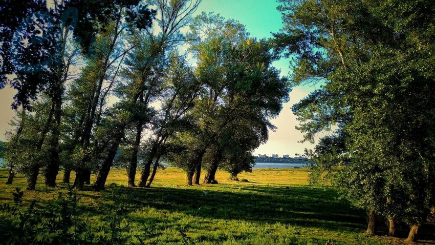 Tree Growth Outdoors Green Color Nature Day Beauty In Nature No People Grass Sky Danube Danube Galati Light And Shadows Tree Galati City Leaf Green Color Nature Silhouette Trees And Shadow Best EyeEm Shot Blue Sky