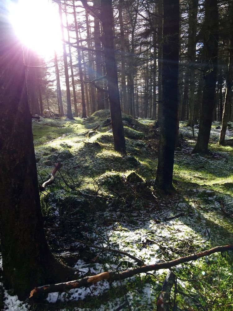 #Dublinmountains #hiking Beauty In Nature Forest Nature Outdoors Sunlight Tranquility